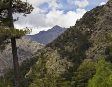 La vallée d'Ascu, balade découverte de la faune endémique